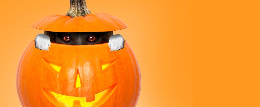 best apps pumpkin creator